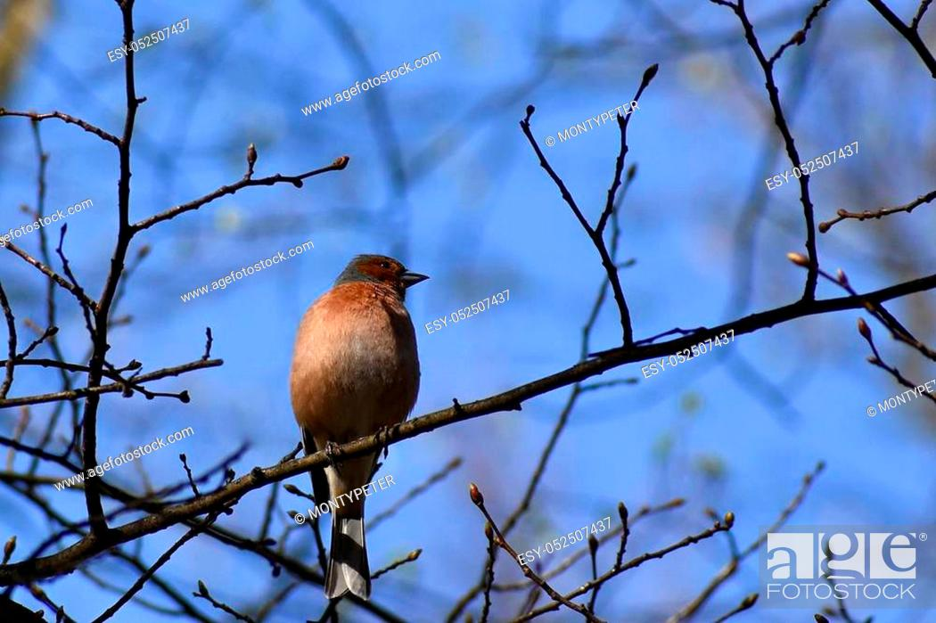 Stock Photo: Beautiful bird on a tree branch in nature. Nuthatch. (Eurasian nuthatch).