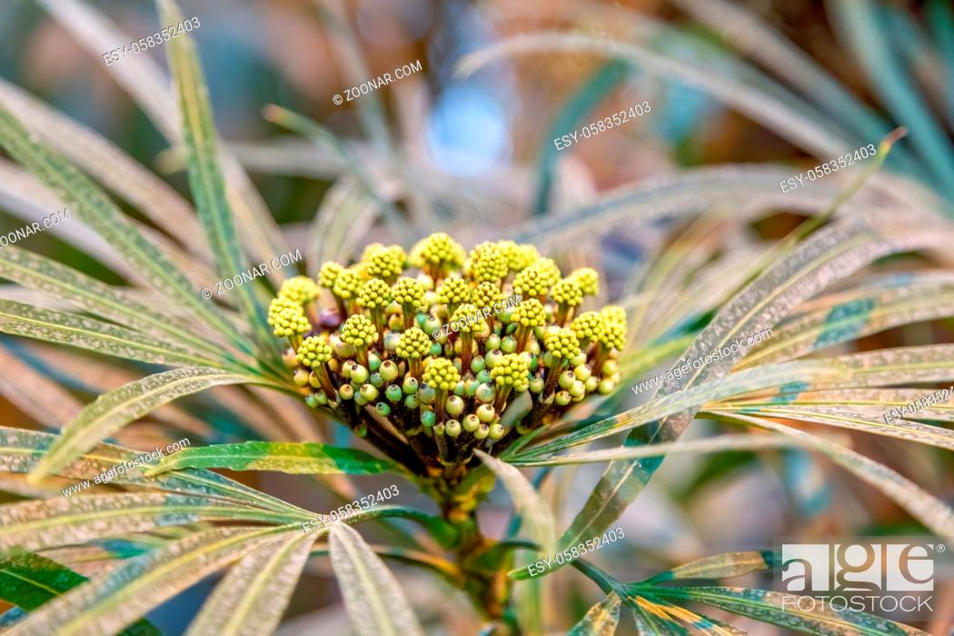 Stock Photo: Bright winter flower bloomed in a botanical garden.