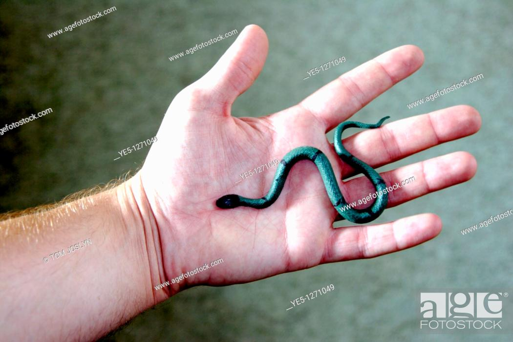 Stock Photo: Rubber toy snake on palm of hand close up.