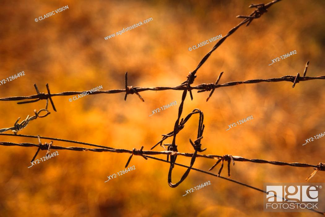 Stock Photo: Tangled barbed wire.