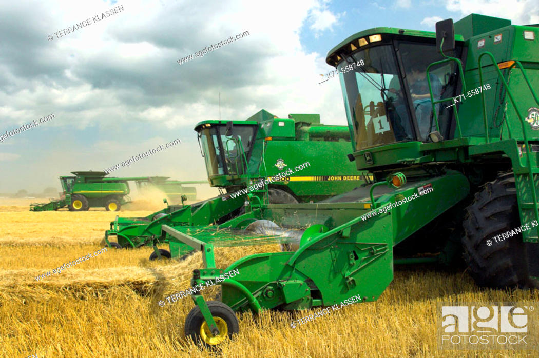John Deere Combines Harvesting Wheat On A Field Near Winkler In