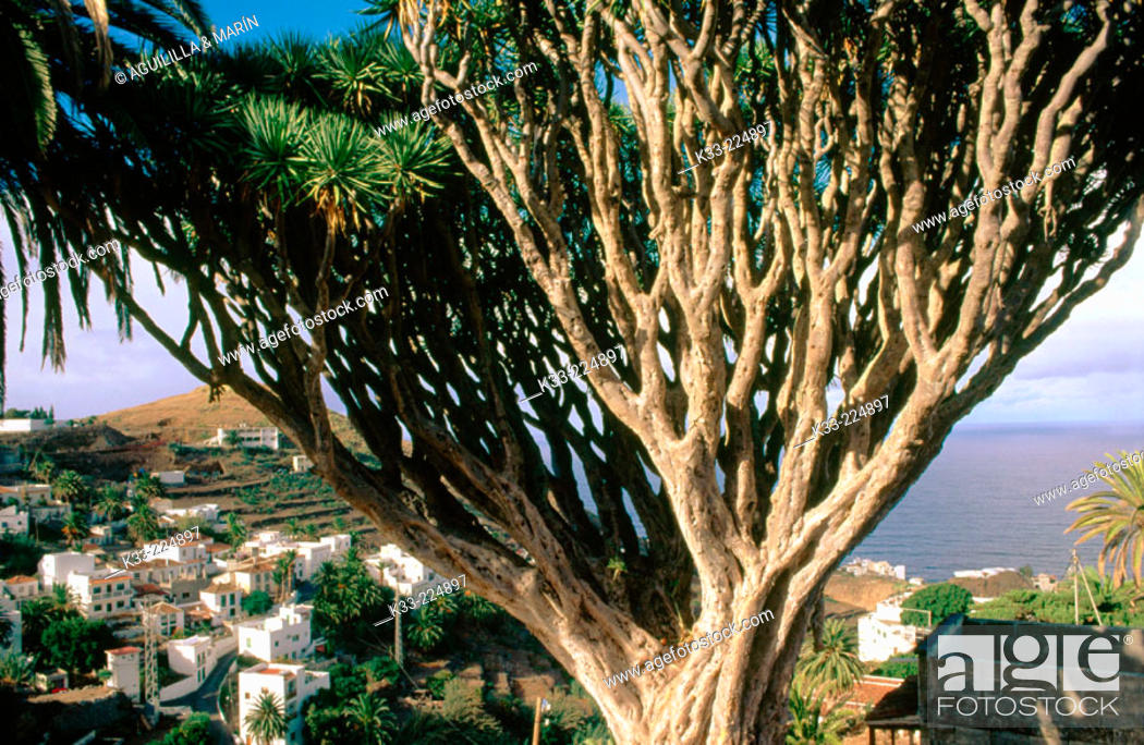 Stock Photo: Tenerife. Canary Islands. Spain.
