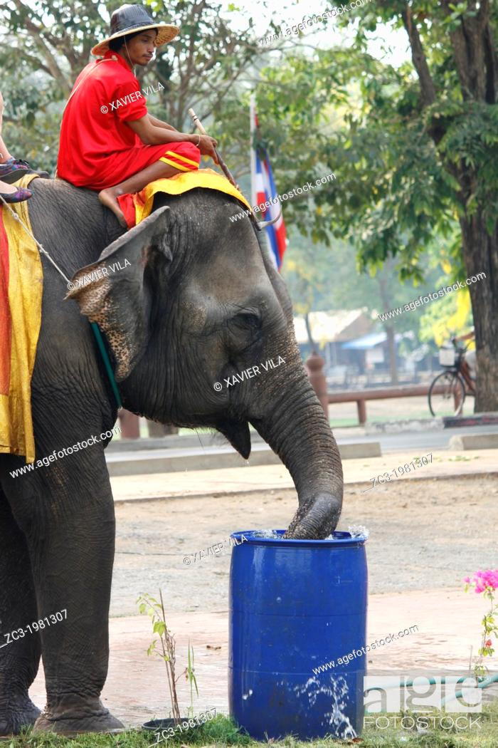 Stock Photo: Elephant, Ayutthaya, Thailand.