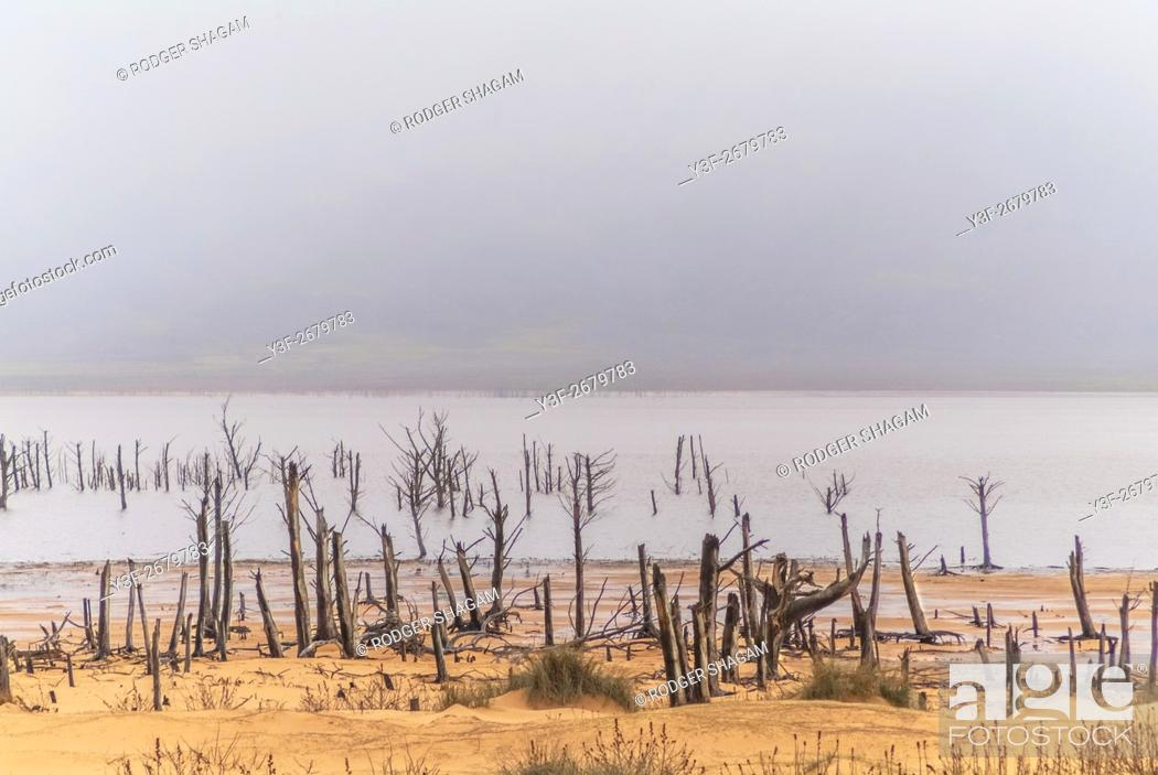 Stock Photo: Receding water exposes trees that had bee covered by water after winter rains. Teewaterskloof Dam, Western Cape Province, South Africa.
