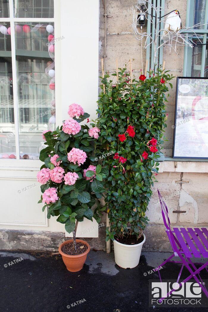 Imagen: Cafe Au Vieux Paris, Ile-de-la-Cite, Paris, France, Europe.