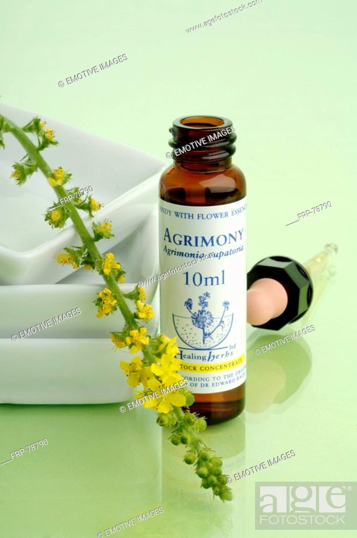 Stock Photo: Homeopathic remedies: Agrimony.