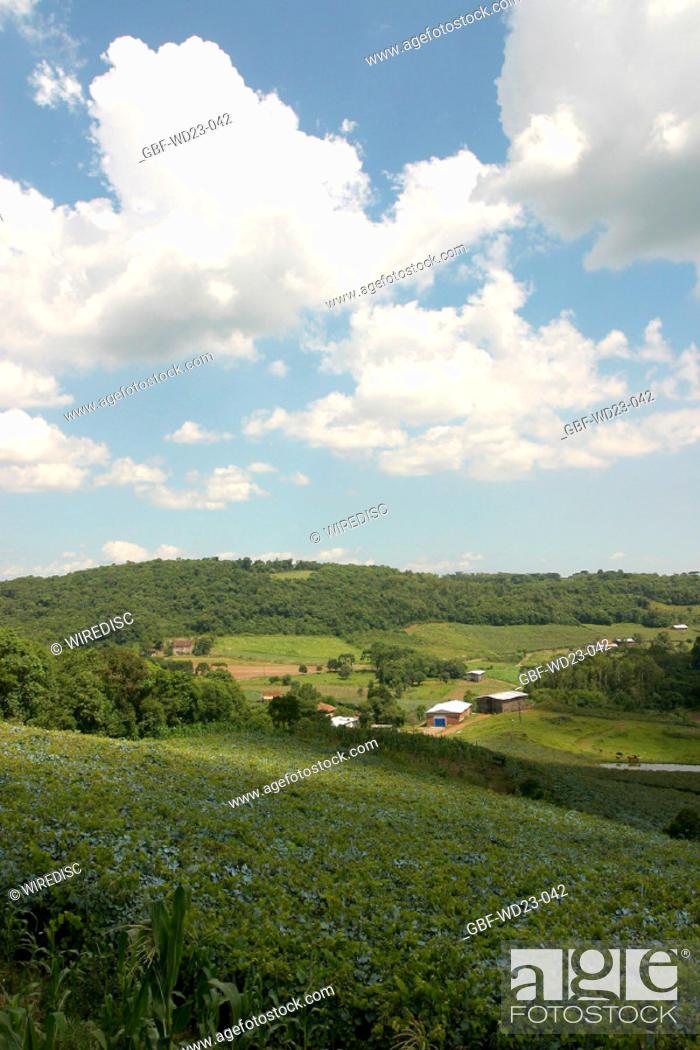 Stock Photo: Farm plantations, agriculture, Brazil.
