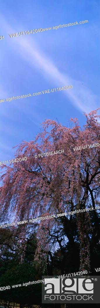 Stock Photo: landscape, panorama, nature, spring, season, scene, panoramic view.
