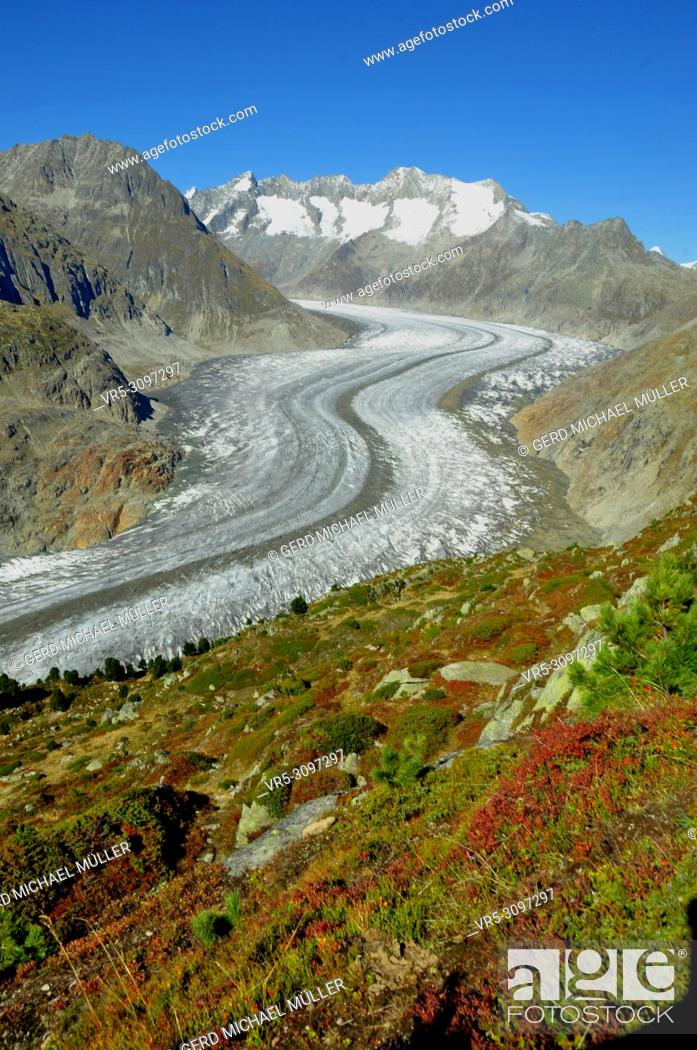 Imagen: From Moosfluh above Riederalp trekkers and bikers have a wonderfull view to the longest melting glacier in the Swiss Alps.