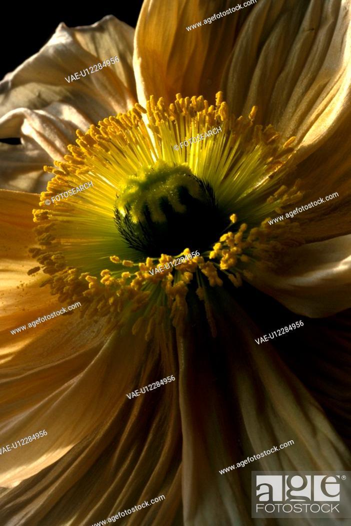 Stock Photo: falten, stempel, abloom, Bernhard, bloom.