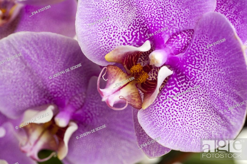 Stock Photo: A close-up of orchid flowers.