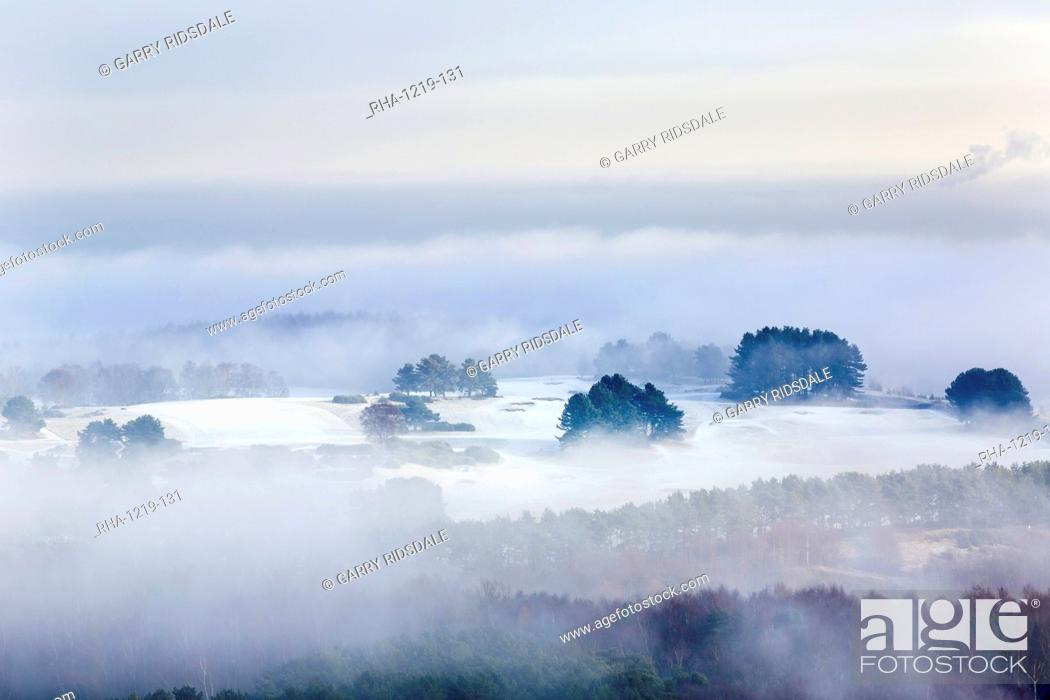 Imagen: Winter fog clearing to reveal frost and snow across the Delamere forest landscape, Cheshire, England, United Kingdom, Europe.