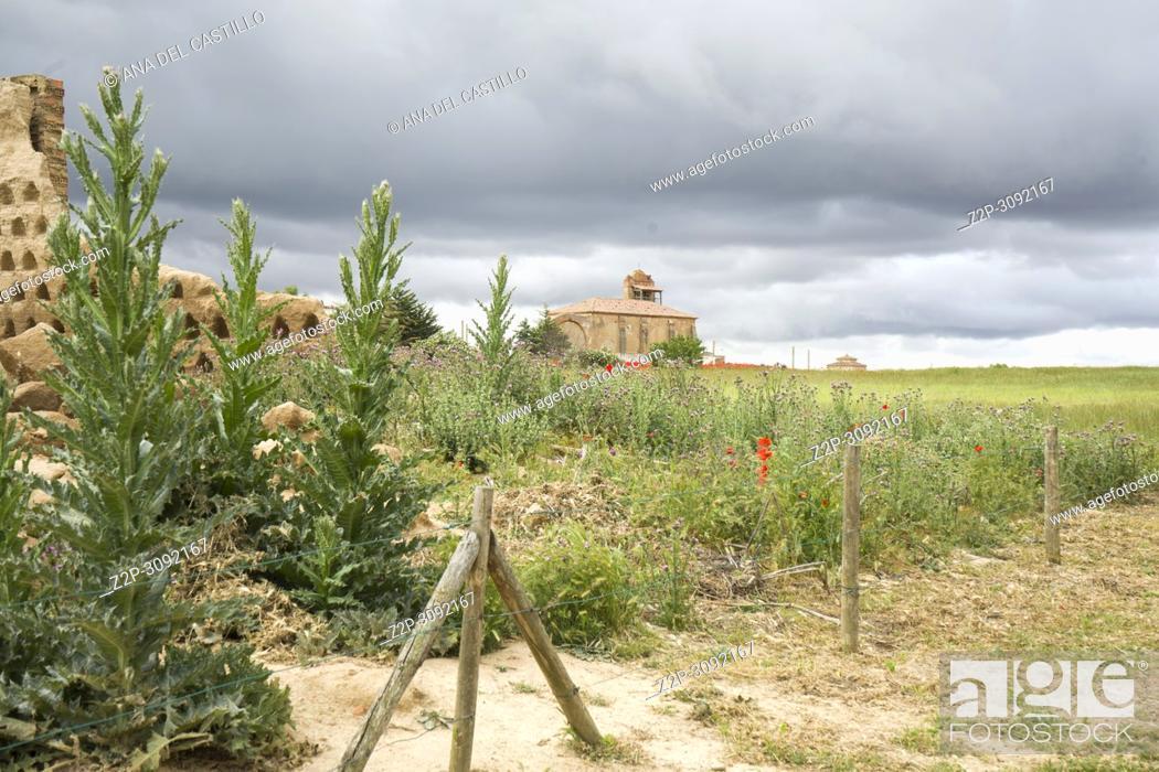 Imagen: Las Lagunas de Villafafila, one of the most important wetlands of northern Spain Zamora province Castile and Leon.