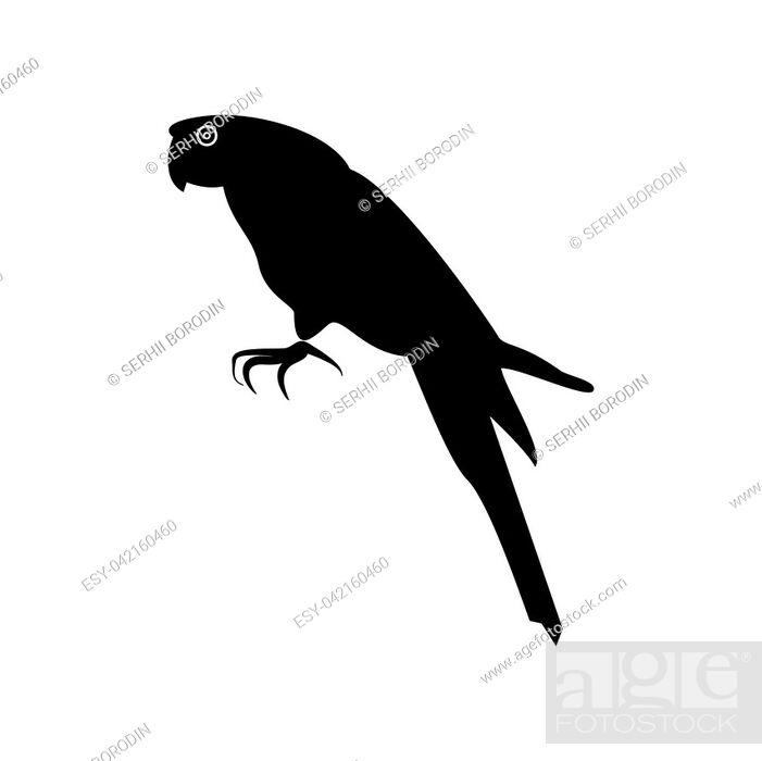 Vector: Parrot it is black color icon .