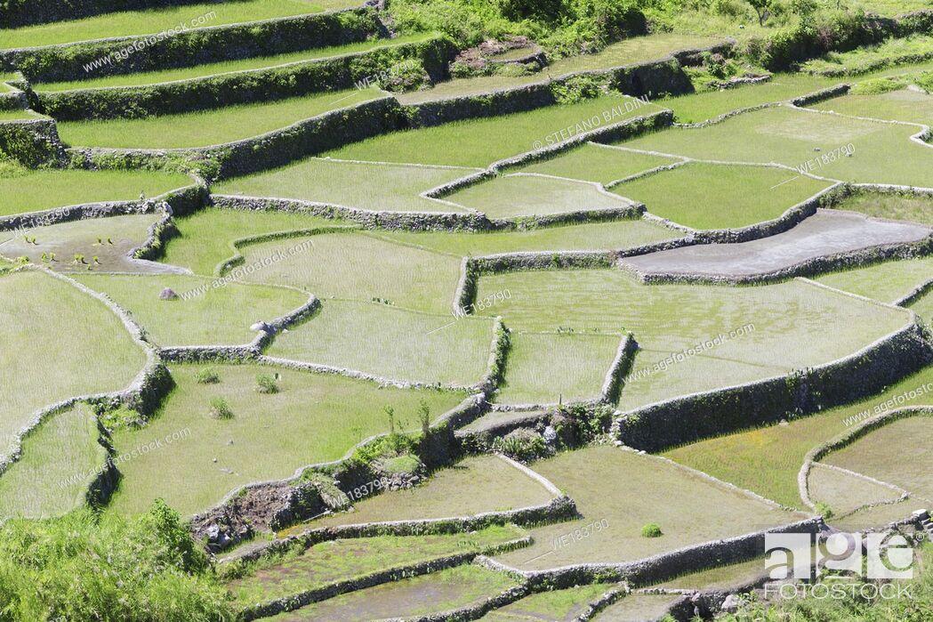 Imagen: Hapao rice terraces, near Banaue, Philippines.
