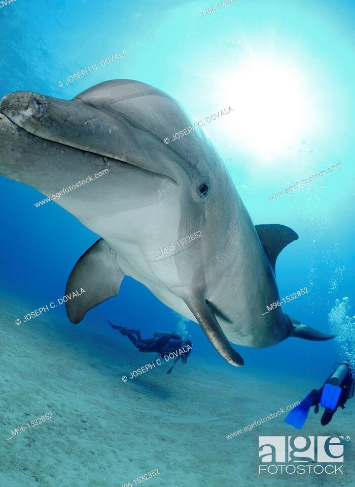 Stock Photo: Scuba divers swimming around dolphin, Roatan, Bay Islands, Honduras.