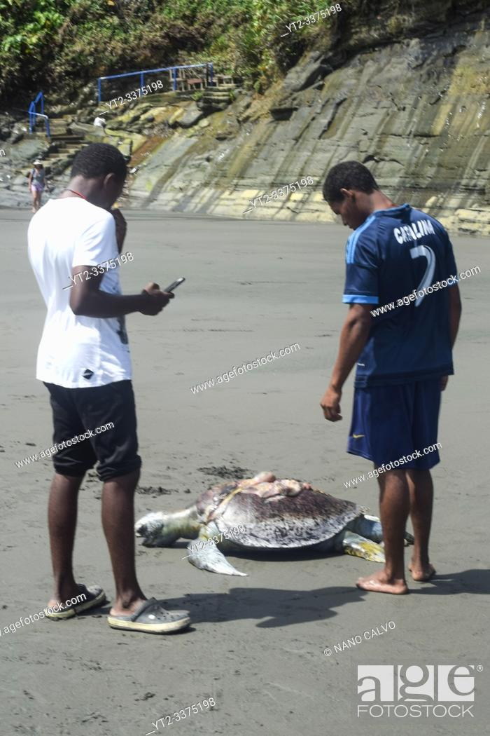 Stock Photo: Young men look at dead Hawksbill sea turtle (Eretmochelys imbricata) killed by boat propeller in Ladrilleros, Pacific Coast of Colombia.