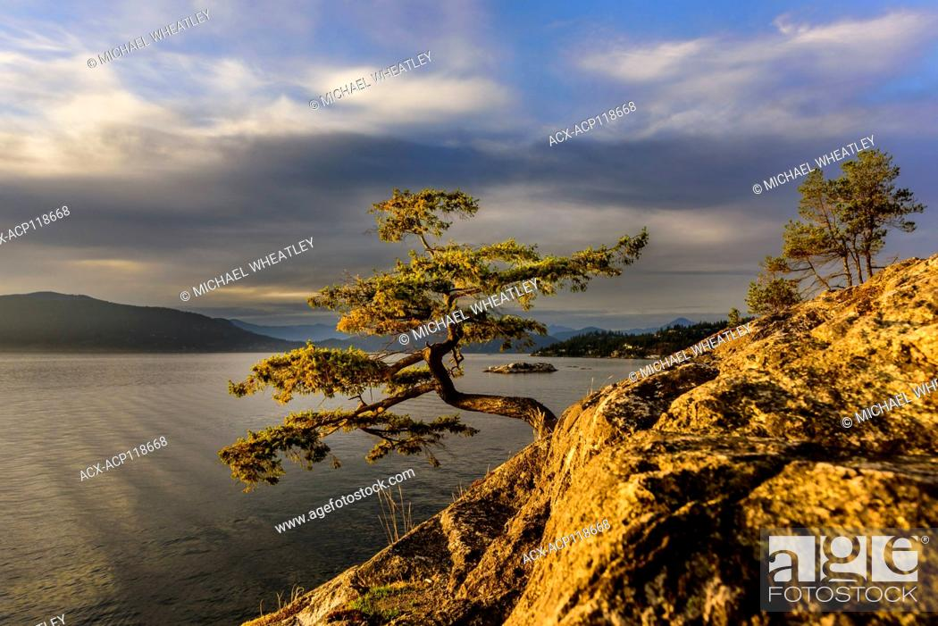 Imagen: Tree at Juniper Point, Lighthouse Park, West Vancouver, British Columbia, Canada.