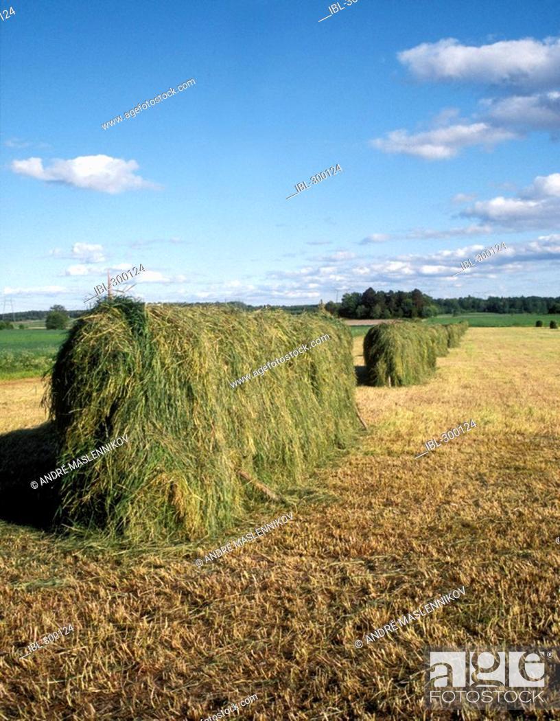 Stock Photo: Hay-drying hurdle.