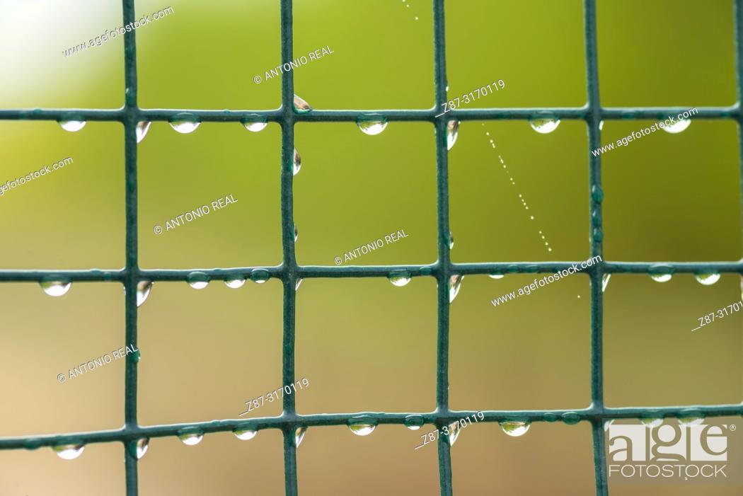 Stock Photo: Green lattice with water drops. Almansa, Albacete province, Spain.