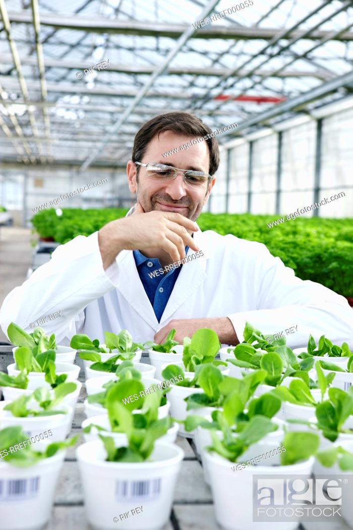 Stock Photo: Germany, Bavaria, Munich, Scientist in greenhouse with corn salad plants.