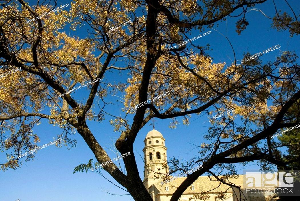 Stock Photo: Cathedral, Baeza. Jaen province, Andalusia, Spain.