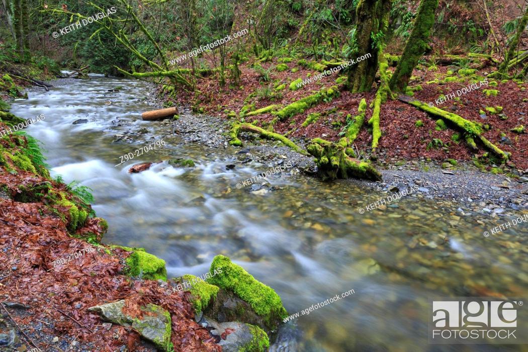 Stock Photo: Niagara Creek in Goldstream Provincial Park, near Victora, British Columbia.