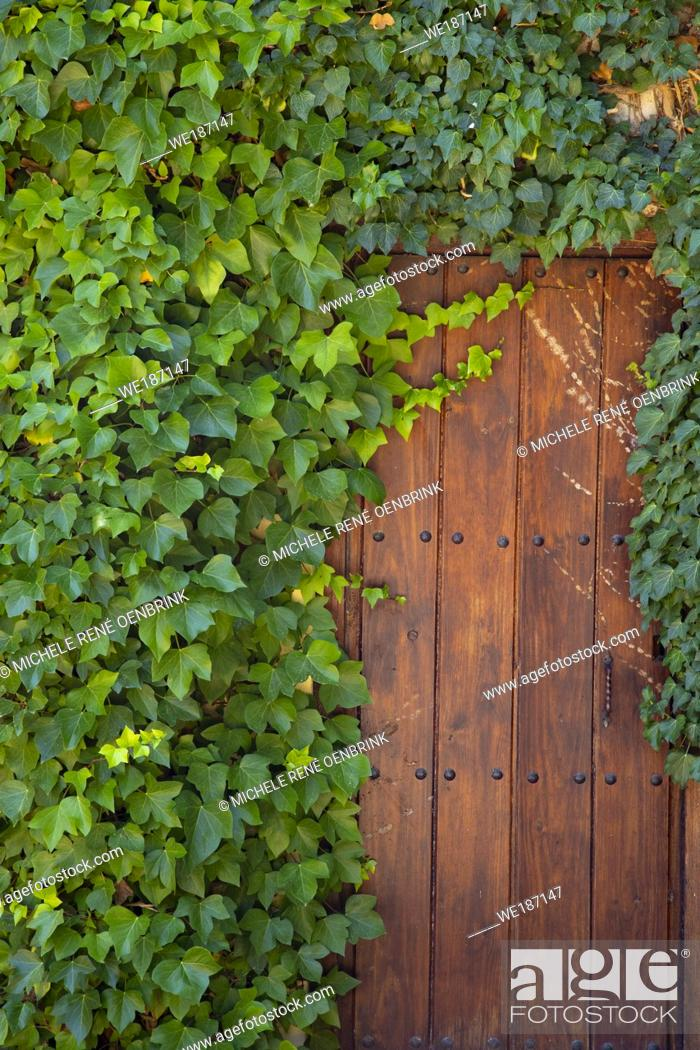 Stock Photo: Winery and vineyard vines growing on building in Basque country Rioja region of Spain.
