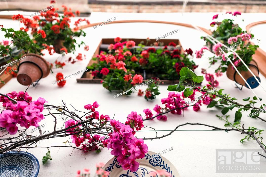 Imagen: Typical andalusian courtyard in Cordoba, Andalusia Spain with a lot of plants.