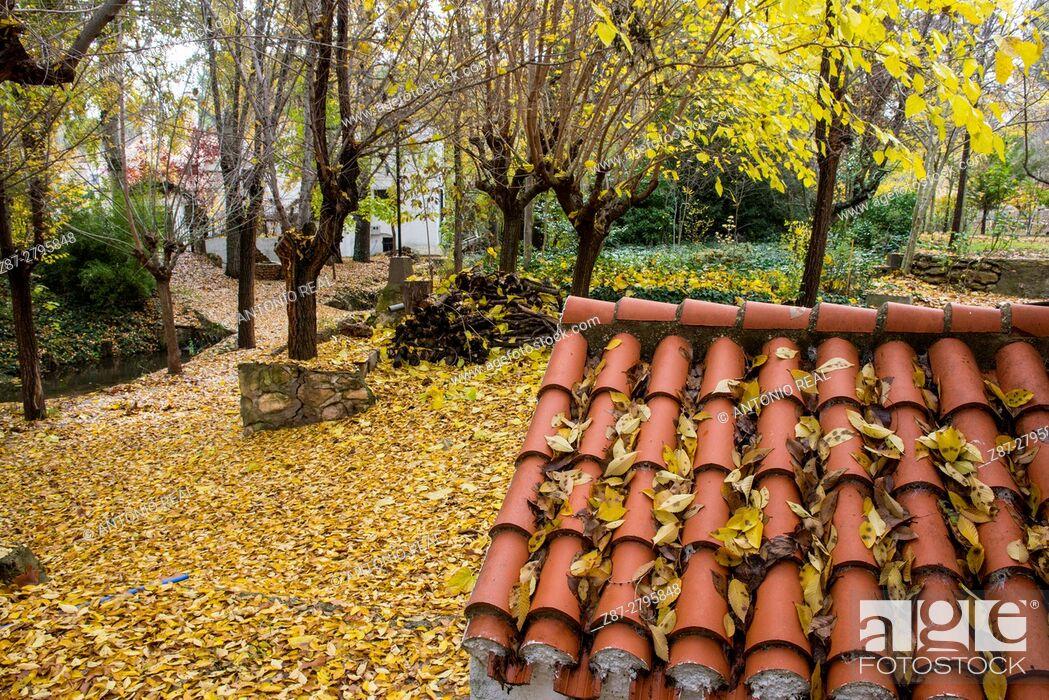Imagen: Roof, Rambla de los Molinos in autumn, Almansa, Albacete province, Castilla-La Mancha, Spain.