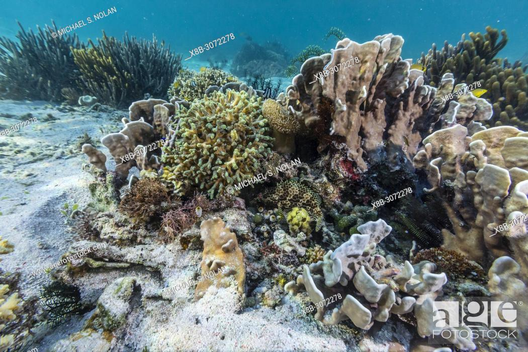 Stock Photo: A profusion of hard and soft corals on Sebayur Island, Komodo National Park, Flores Sea, Indonesia.