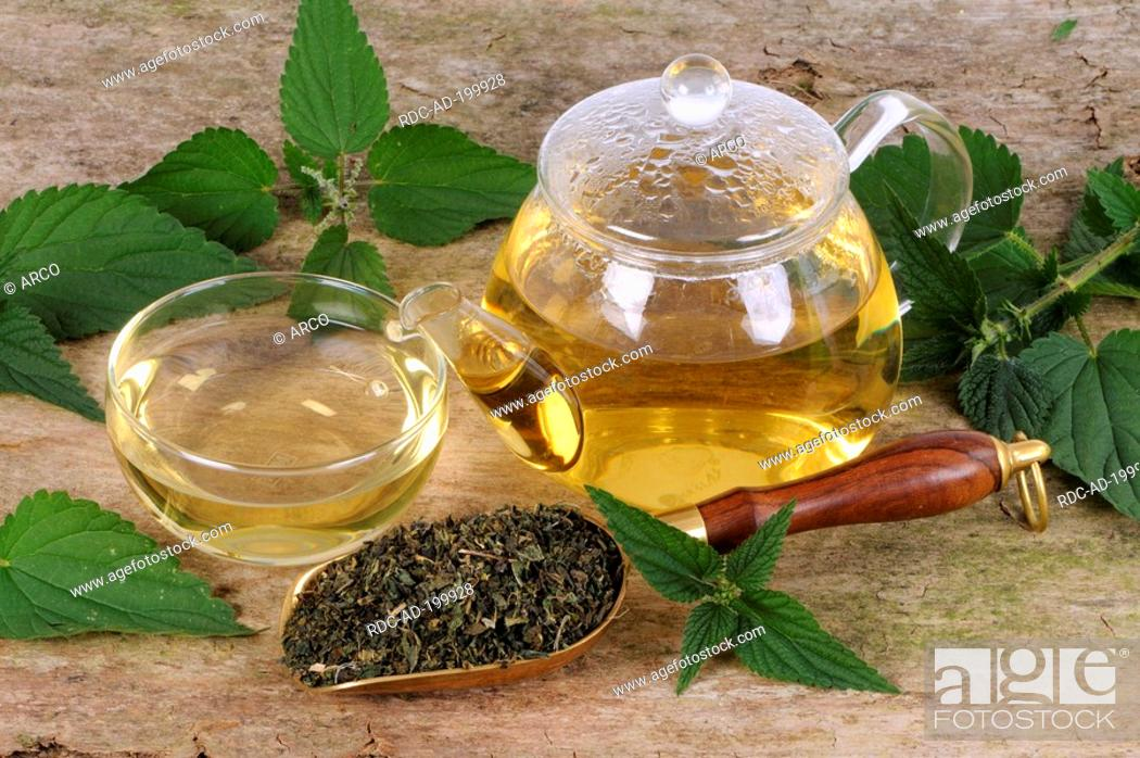 Stock Photo: Cup and teapot with Nettle tea, Urtica dioica.