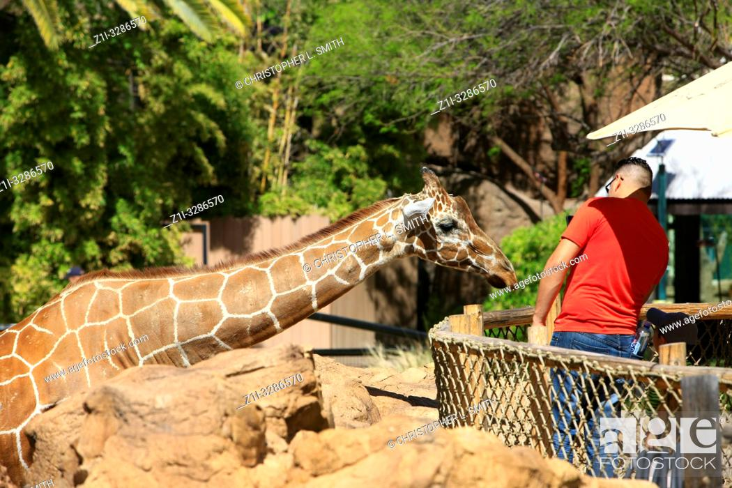 Stock Photo: Children feeding the Giraffe's at Reid Park Zoo in Tucson, AZ.