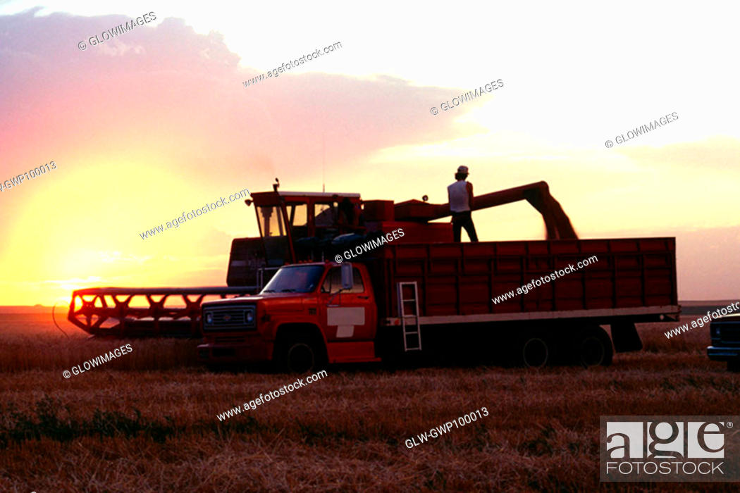 Stock Photo: Wheat harvest and a combine with sunset in the background , Burlington , Colorado.