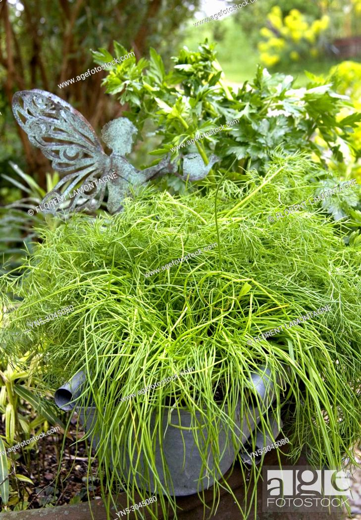 Stock Photo: Aromatic herbs in pot with dill, parsley and chives.