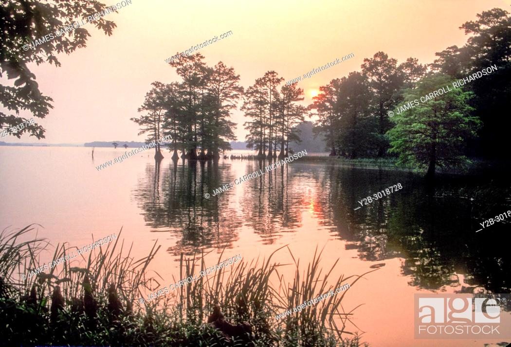 Stock Photo: Sunrise at Reelfoot Lake in Tennessee.