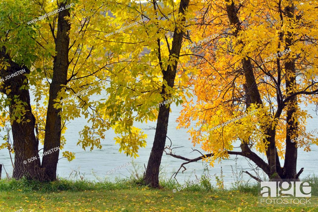 Stock Photo: Autumn ash trees on the shores of Crooked Lake, Qu'Appelle Valley, Saskatchewan, Canada.