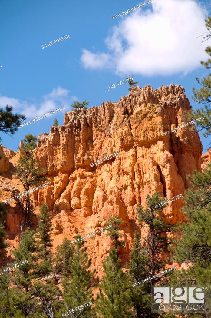 Stock Photo: USA Utah, Red Canyon in Dixie National Forest near Zion National Park.