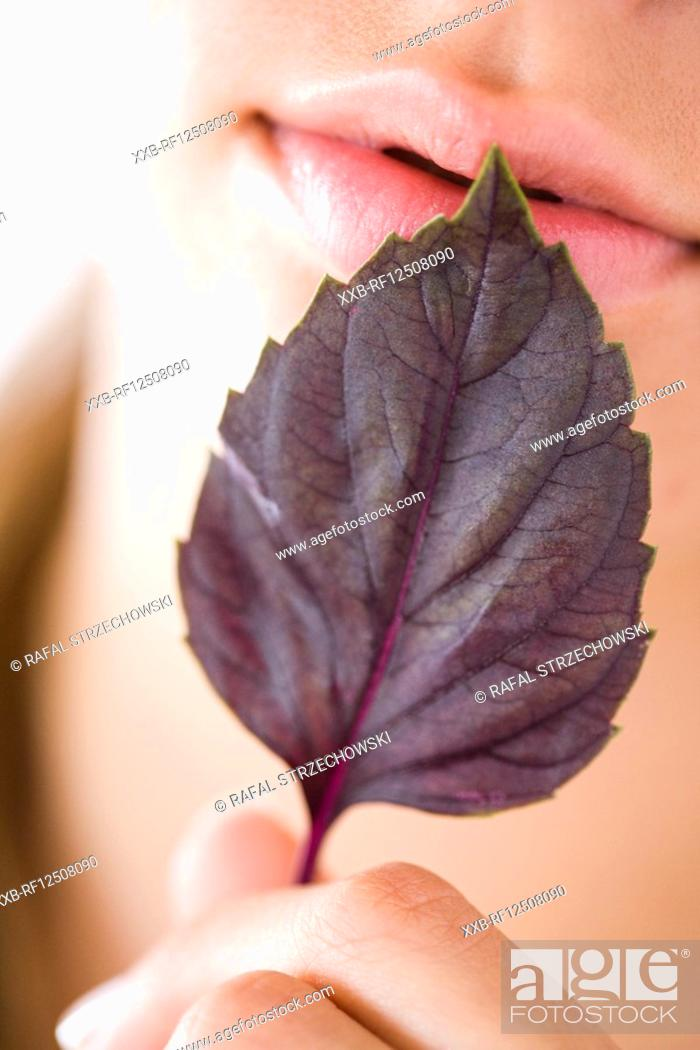 Stock Photo: closeup of red basil leaf.