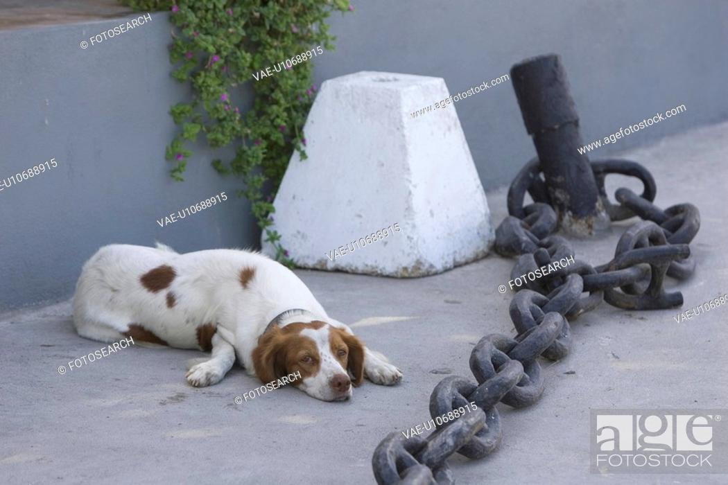 Stock Photo: Chain, Floor, Dog, Day, Adult Animal.