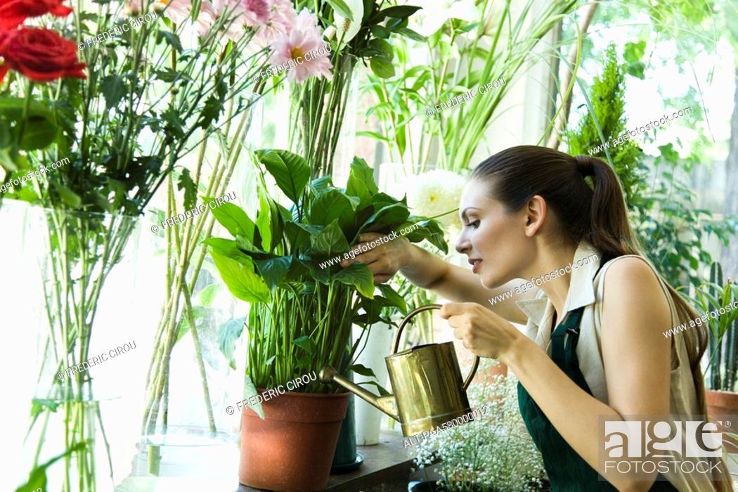 Stock Photo: Female florist watering plant.