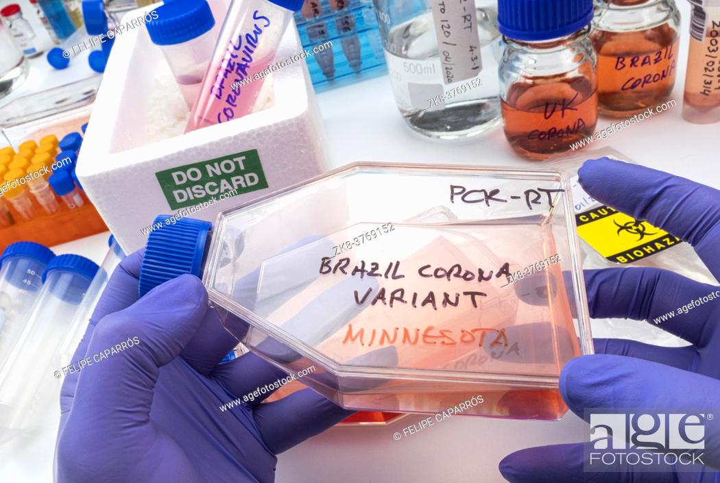 Stock Photo: Scientist holds vial of new Brazilian covid-19 strain found in Minnesota in research, concept image.