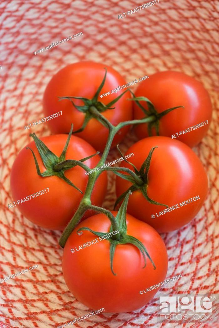 Stock Photo: Ripe vine tomatoes.