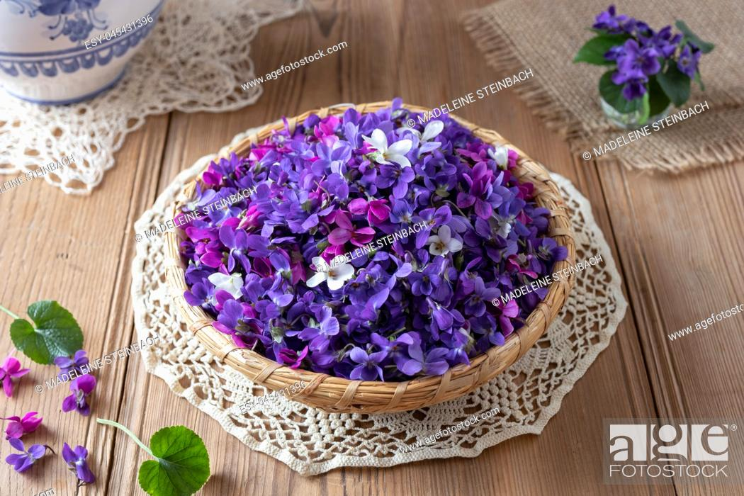 Stock Photo: Wood violet flowers in a basket on a table.
