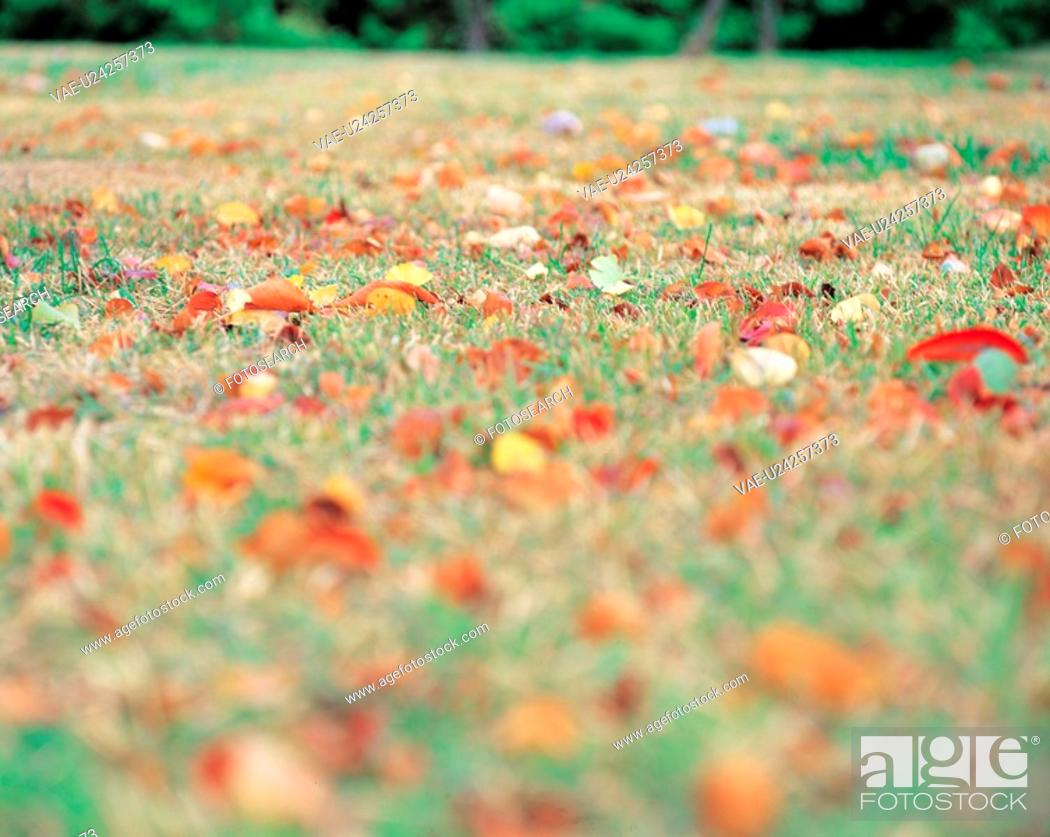 Stock Photo: field, leaves, landscape, scenery, fallenleaves, nature, autumn.