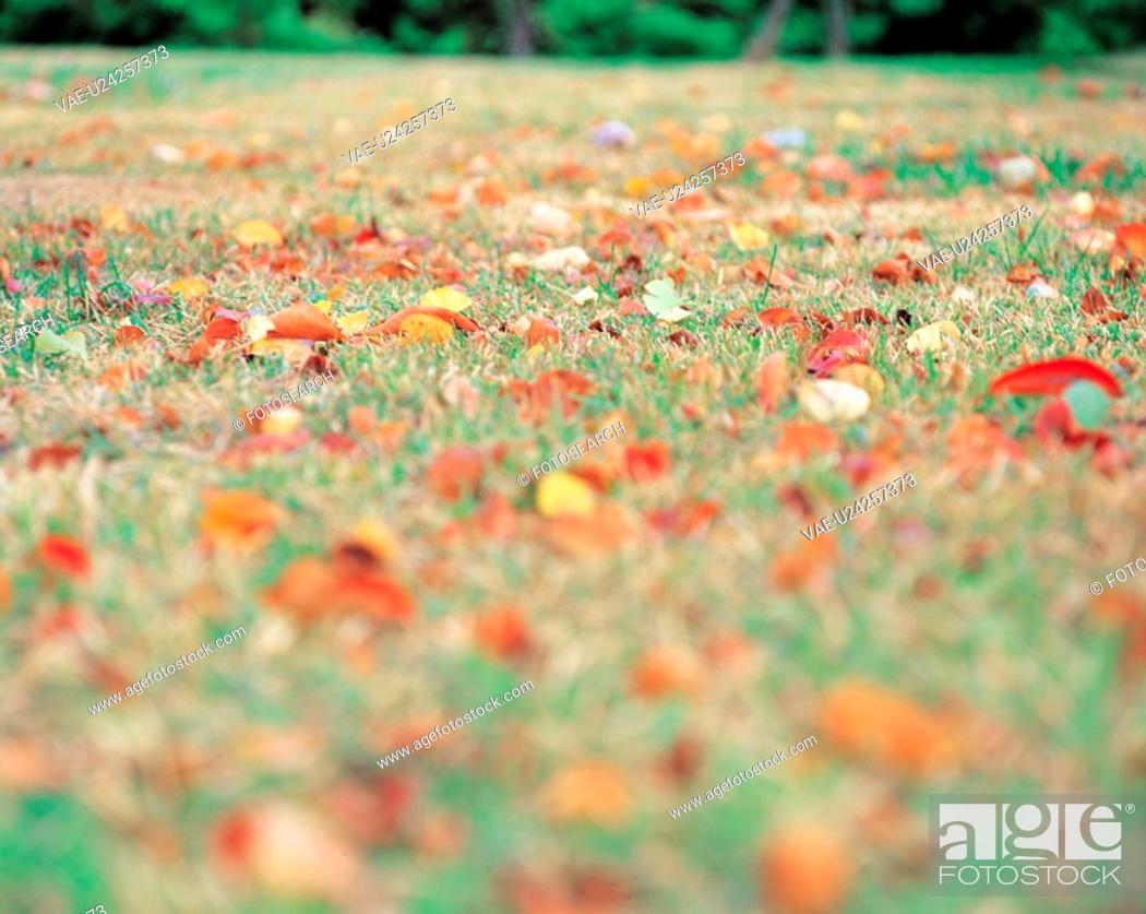 Stock Photo: field, leaves, landscape, scenery, fallenleaves, nature, autumn.