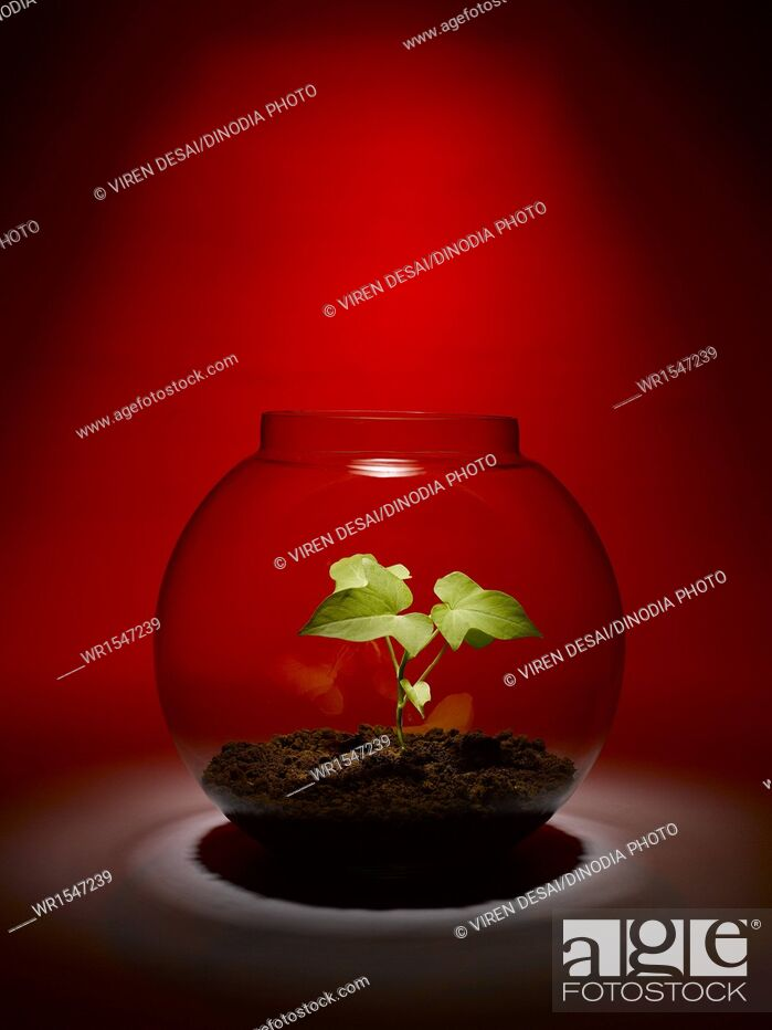 Imagen: plant growing inside a glass bowl India.