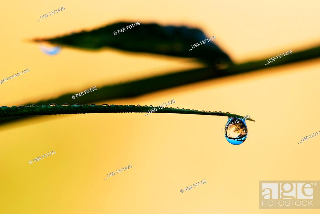Stock Photo: Raindrop on leaf, Rio Branco, Acre, Brazil, 2010.