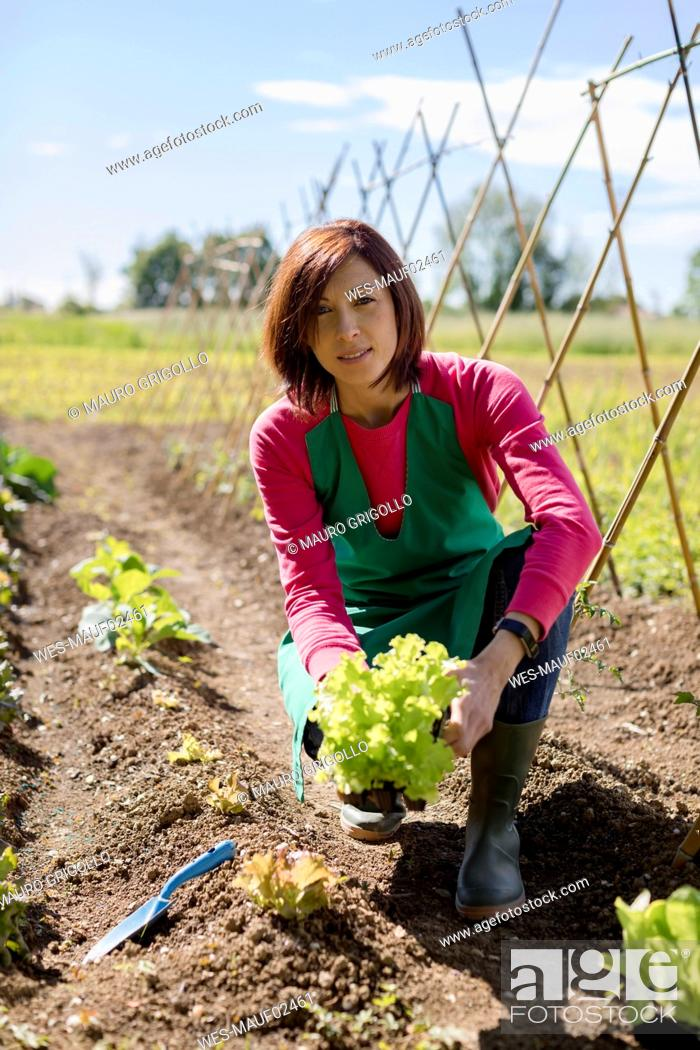 Stock Photo: Woman working in her vegetable garden, Italy.