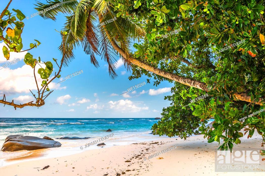 Stock Photo: Beach of the Seychelles, Island Mahé, coast at Beau Vallon.